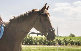 Wakacje z koniem- Lato 2014